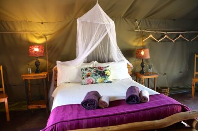 ADDO AFRICAN HOME TEL: +27 (0) 42 233 1244